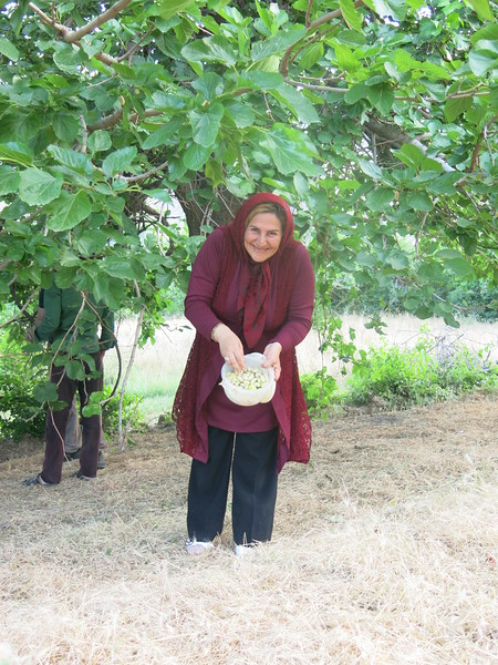 Mother Samimi picking mulberries